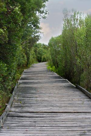 old wooden path through green foliage photo