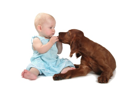 The small girl feeding a puppy on a white background