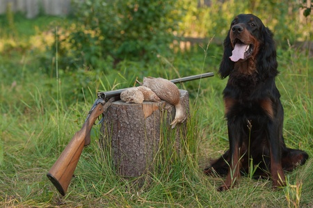 setter sitting next trophies and rifle on grass