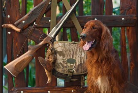 fusil de chasse: Chien de chasse à proximité de fusil de chasse et trophées, horizontales, à l'extérieur