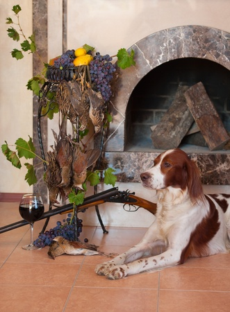 Gun dog near to shot-gun, trophies and glass of wine against fireplace