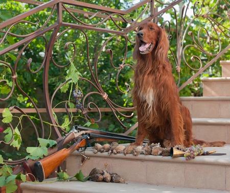 perro de caza: Perro de caza de aves sentado en una escalera cerca dos escopetas y aves Foto de archivo