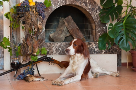 Bird hunting dog lying in front of a fireplace near a shotgun, dead bird and glass of wine, horizontal photo