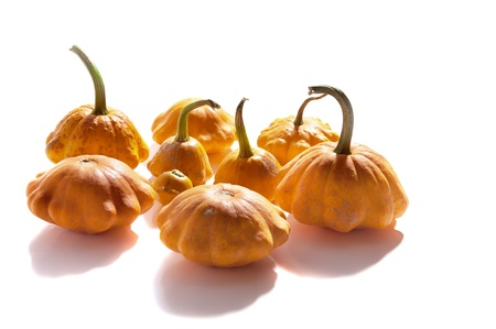 abreast: bush pumpkins abreast on a white background