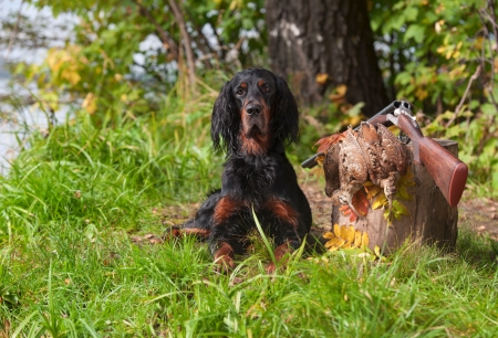 Gun dog near to shot-gun and trophies, horizontal, outdoors Imagens