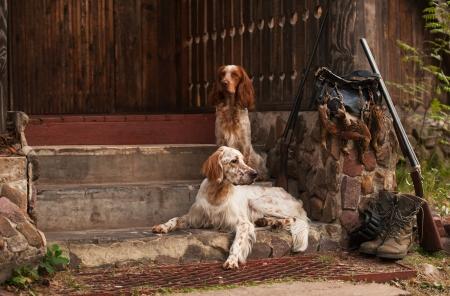 Gun hond de buurt van shot-gun en trofeeën, horizontaal, in openlucht