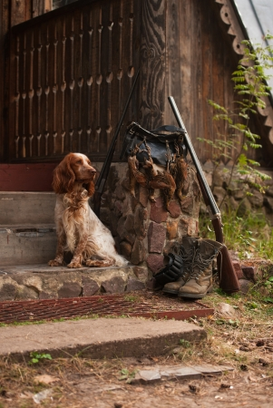 Gun dog near to shot-gun and trophies, vertical, outdoors photo