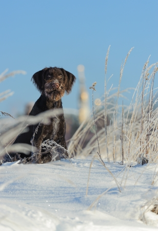 Brown dog sits on snow against the sky, vertical Stock Photo