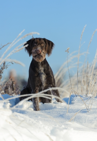 Brown dog sits on snow against the sky, vertical photo