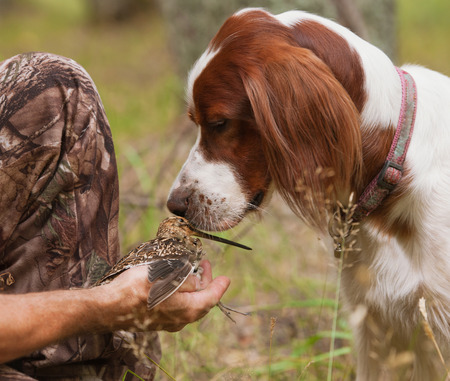 sniff: setter sniff snipe in the hands of