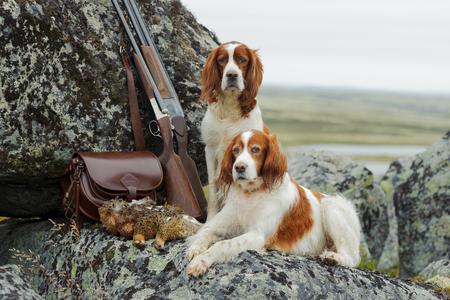 총과 트로피, 수평, 야외에 가까운 두 setters
