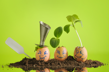 Three organic seedling plants in funny Easter Eggs, smiling faces with expression on lime green background, eco gardening. Horizontal. Stock Photo