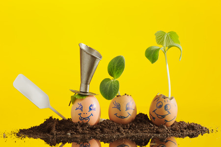 Three organic seedling plants in funny Easter Eggs, smiling faces with expression on yellow background, eco gardening. Horizontal.