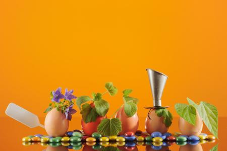 Five organic seedling plants in Easter eggs on orange background. Eco gardening. Horizontal. Stock Photo