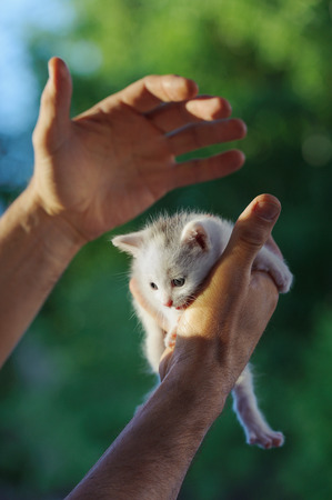 Small white kitten sits on his hands against a background of green foliage Stock Photo