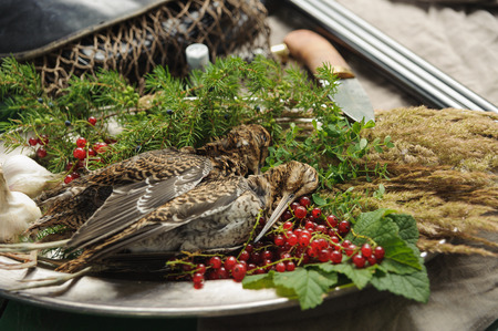 Wild hunting fowls in cooking. Two snipe or woodcock lie on metal dish. Hunting composition, outdoors. Wildfowl hunting.