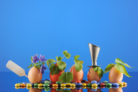 Five organic seedling plants in Easter eggs on blue background. Eco gardening. Horizontal. Stock Photo