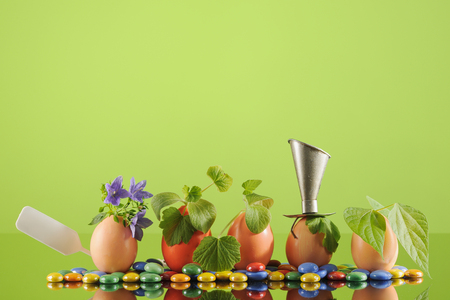 Five organic seedling plants in Easter eggs on lime green background. Eco gardening. Horizontal.