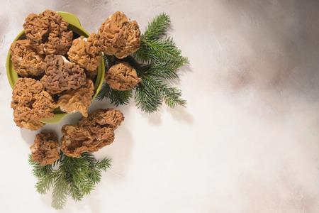 Morels mushrooms and fir-tree branches arranged on light background. Top View.