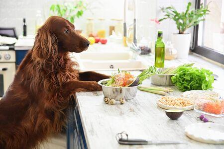 Cocinar comida vegetariana para mascotas. En el interior.