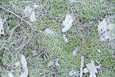 White texture. White painted moss, cones and spruce needles. Horizontal. Stock fotó