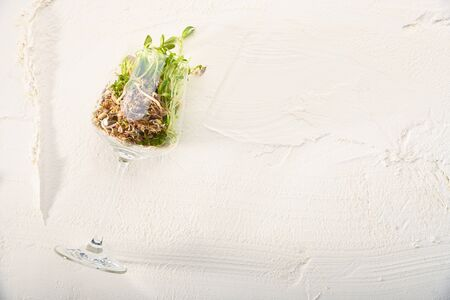 An alternative view of food. Natural Sprouts inside a wine glass on a white textured background. Creative conceptual and colorful collage.