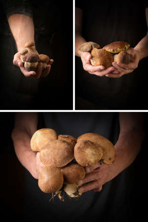 Man holding king bolete in hand. Rustic style. Collage of three images