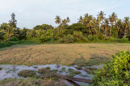 Dry farm with water and also coconut trees in the background 版權商用圖片