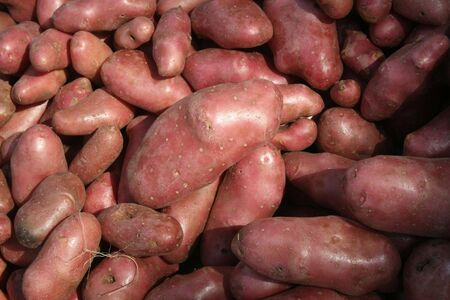 starch: organic spanish potatoes
