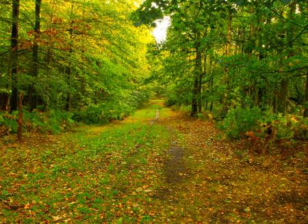 A track going through an autumn forrest photo