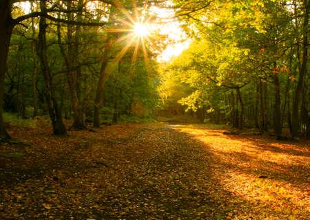shining through: Un piccolo sentiero attraverso il bosco d'autunno con il sole che splende attraverso