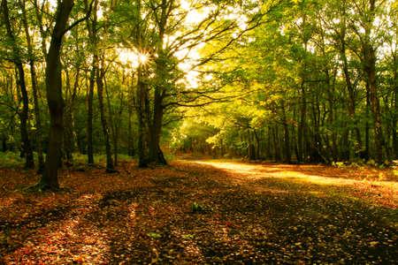 forrest: Zonlicht door de herfst bomen