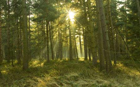 shining through: Una vista attraverso un bosco con i raggi del sole che splende attraverso