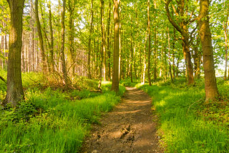 wooded: A dirt path through a wooded area