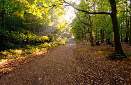 amanecer: Sun rompe a través de los árboles de otoño de los bosques en la madrugada, que muestra todos los colores del otoño