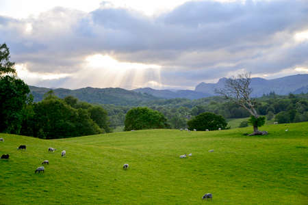 lake district: Hills across fields in the lake district Stock Photo