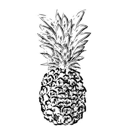 Pibapple schets, vector illustratie
