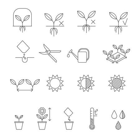 germinate: Seeding instructions, plating process steps. Set of outline vector icons