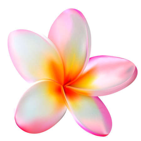 Fresh plumeria flower tropical reslistic vector illustration