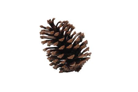 pomme de pin: for�t c�ne de pin sur un fond blanc