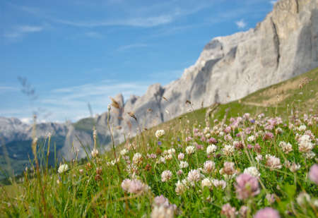 Alpine meadow with clover photo