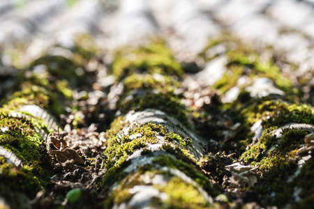 damaged roof: Old slate roof with moss on it, selective focus
