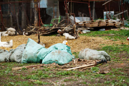 Goose hiding behind sacks on the yard