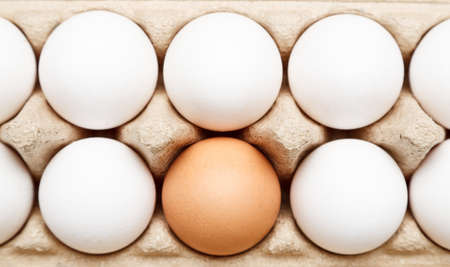 Brown egg among white eggs in paper tray