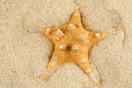 Starfish in sand on the beach, closeup shot 写真素材 - 126219895