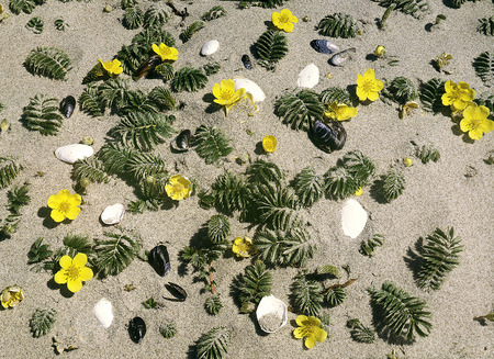 mussle: Sand with shell of mussle and flower Stock Photo