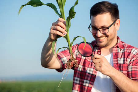Happy smiling young agronomist or farmer examining young corn plant root under a magnifying glass, looking for parasites. Organic farming and healthy food production Standard-Bild
