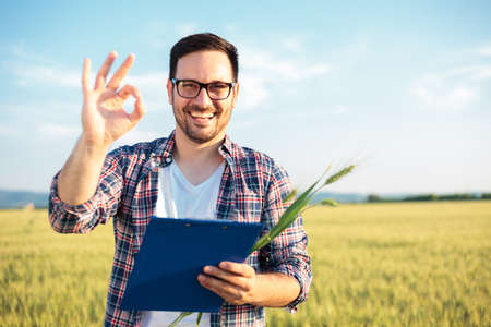 Smiling young agronomist or farmer inspecting wheat field before the harvest. Looking directly at camera, showing OK sign and holding a clipboard. Organic farming and healthy food production