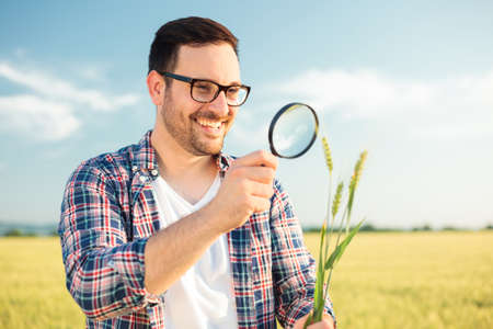 Happy young agronomist or farmer inspecting wheat plant stems with a magnifying glass. Working in a wheat field before the harvest. Organic farming and healthy food production. Stock fotó
