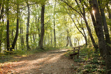 Tranquil morning in a forest, footpath and a single wooden bench. Standard-Bild
